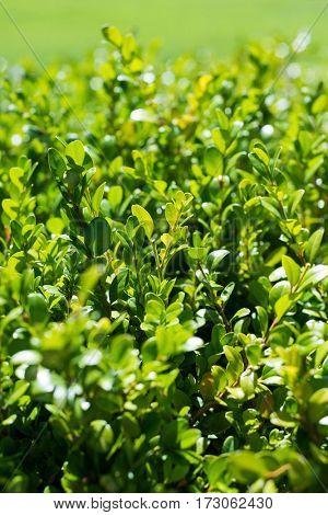 Close-up of beautiful green plants