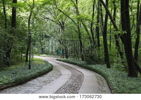 Alley curve parallelepipeds green color vegetation empty no body