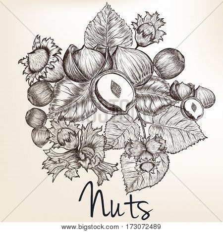 Background with vector high detailed hand drawn nuts in engraved style