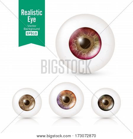 Human Eyeballs Set With Big Irises In Colour. Vector Illustration Of 3d Glossy Detailed Eye With Shadow And Reflection. Cornea. Front View. Isolated On White Background.