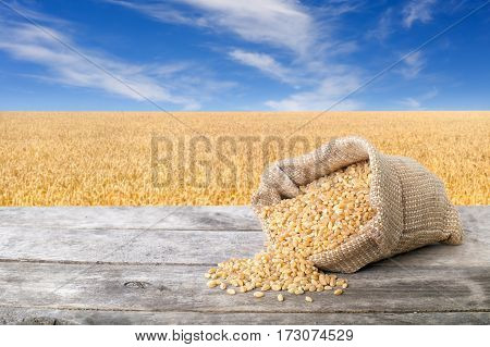 Bulgur scattered out of the bag on table with field of wheat on the background. Agriculture and harvest concept. Ripe wheat field and blue sky