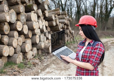 Lumber Engineer With Logs