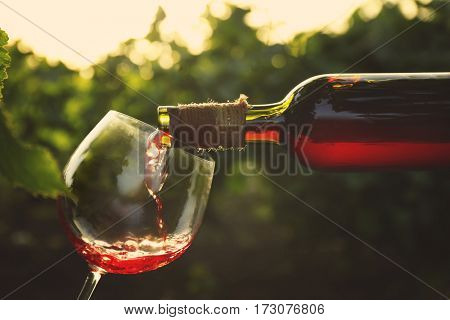 Pouring red wine into glass on blurred nature background