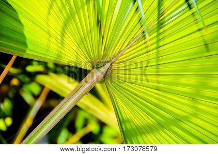 A symmetrical green leaf found out walking