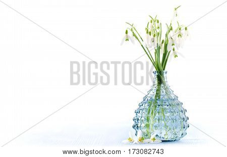 bouquet of fresh snowdrops flowers in a glass vase on blue wooden and white background