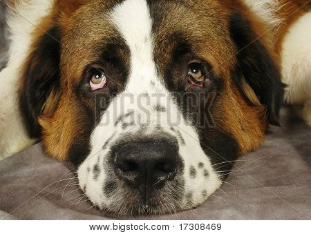 Animal mascota lindo