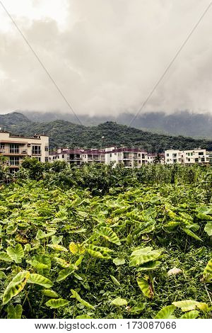 Village In Hong Kong