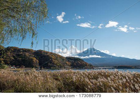 Beautiful view of Mount Fuji and field at Lake Kawaguchi in autumn season This mountain is a famous natural landmark and symbolic of Japan