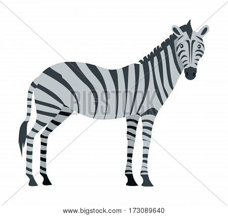 Zebra cartoon isolated on white. African equids horse family united by their distinctive black and white striped plains zebra, the Gr vy s zebra and the mountain zebra. Sticker for children. Vector