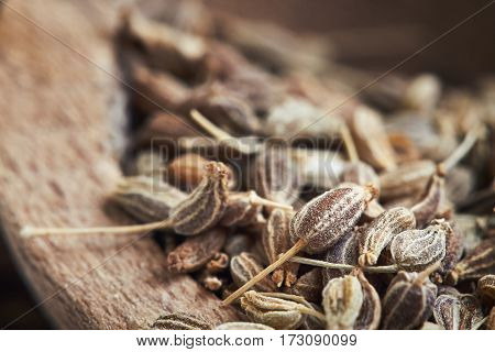 Dried Anise Seed