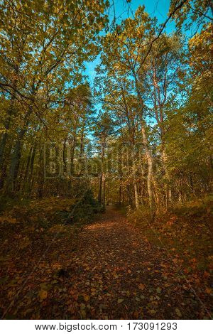 autumn trees in the forest and road