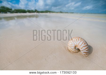 nautilus shell with sea wave,  cuba beach  under the sun light, live action