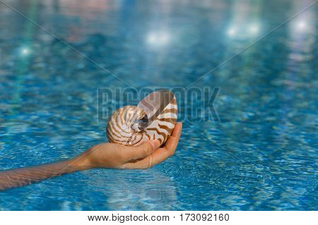 nautilus shell  on woman's hands in the sea water