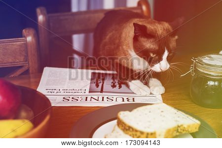 Breakfast Bread Newspaper Cat On The Table