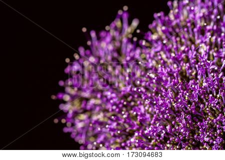 Fine fresh abstract lilac flowers close-up, macro view. Beautiful natural floral background, always fashionable modern color. For backdrop, substrate, composition use. With place for your text