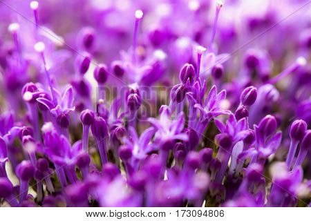 Fine fresh abstract lilac flowers close-up, macro view. , selective focus. Beautiful natural floral background, always fashionable modern color. Concept of vivid moments life. For background , backdrop, substrate, composition use.