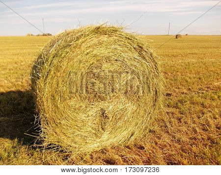 A roll of yellow hay in a field