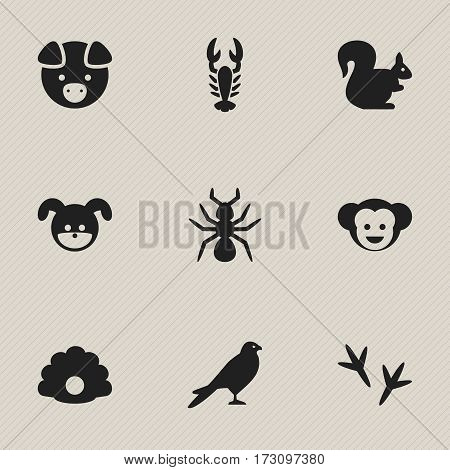 Set Of 9 Editable Animal Icons. Includes Symbols Such As Footprint, Puppy, Conch And More. Can Be Used For Web, Mobile, UI And Infographic Design.