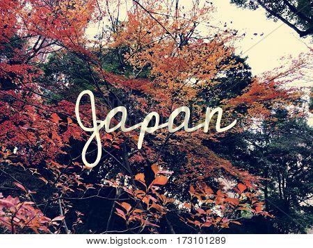 Autumn Red Leaves Nature Landscape