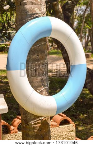 Blue and white rescue buoy hanging from a palm tree trunk in a hotel in Mombasa