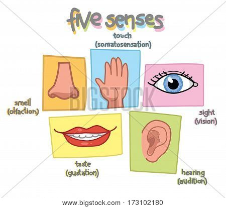 Senses illustration. Sight, hearing, taste, smell and touch