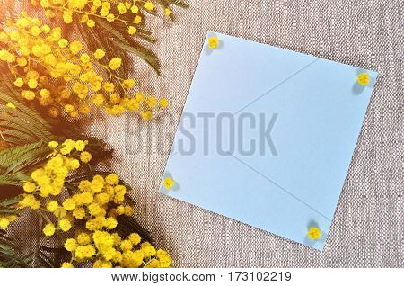 8 March postcard -mimosa flowers and blue card with space for text on the brown linen tablecloth. 8 March background. 8 March is internatiional women day