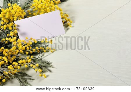 Spring background - mimosa spring flowers and blank card with free space for text for spring holiday message. Spring still life with spring flower of mimosa