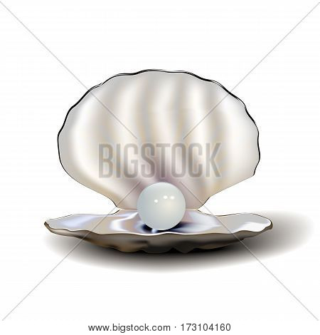 Realistic mother of pearl shell with pearl and shadow, isolated on white background. Vector illustration.