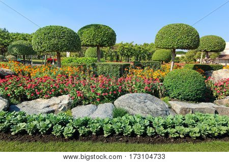 Beautiful dwarf tree and flowerbed in the garden