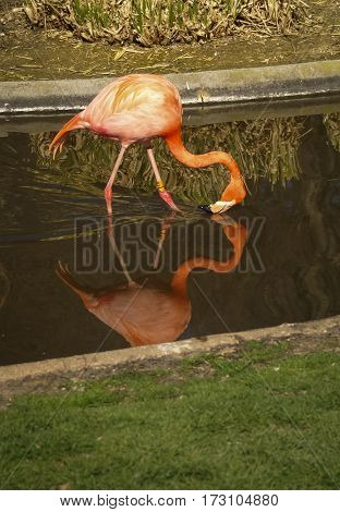 Reflection Of A Flamingo, Madrid, Spain