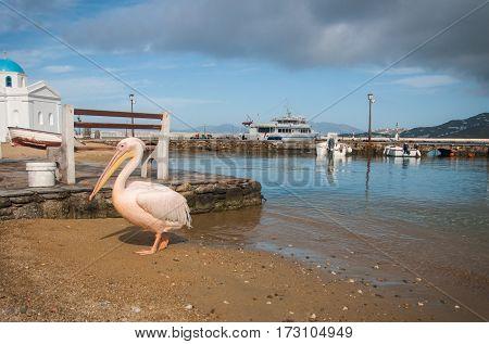 Symbol Of The Island - Pelican Petros, Mikonos, Greece