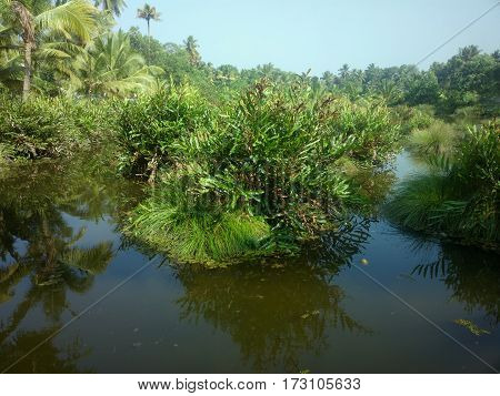 Lush Tropical Grass-roots Swamp