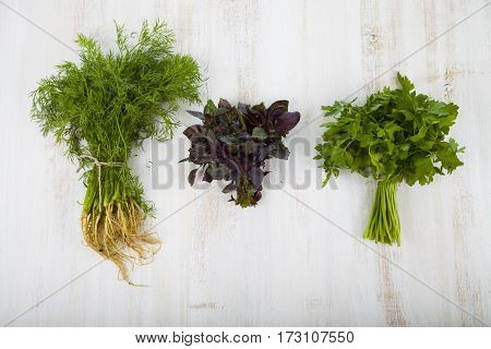 Parsley, Dill And Basil On A Light Wooden Background.