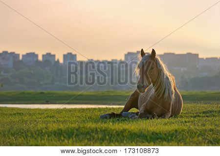 Horse sitting down at sunset