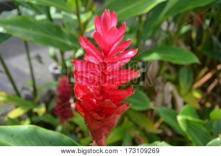 Red Fower Fresh Dew Green Tropical Exotic