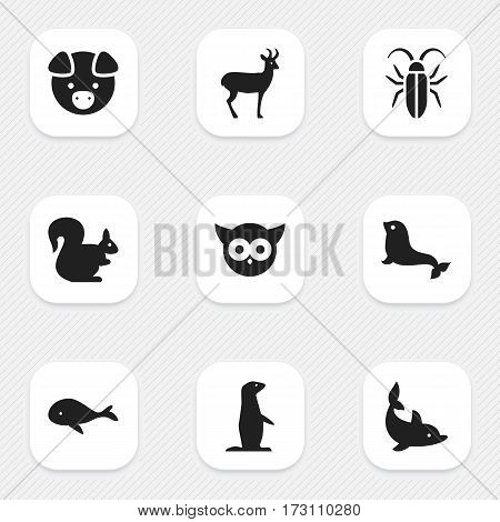 Set Of 9 Editable Zoo Icons. Includes Symbols Such As Wild Rodent, Playful Fish, Groundhog And More. Can Be Used For Web, Mobile, UI And Infographic Design.