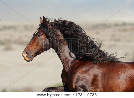 beautiful running andalusian stallion with flowing mane on a wind