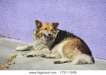Stray dog on city street at summer