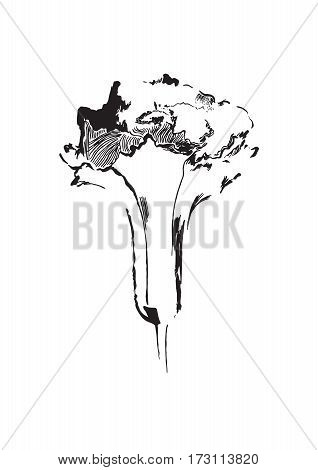 Black hand drawn flower print. Sketch style. Vector isolated.