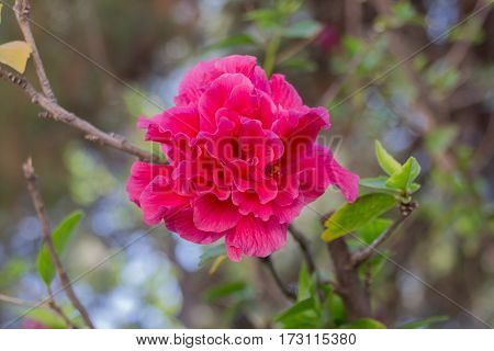 Beauty Summer Flowers