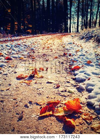 First snow on colorful leaves. Autumnal nature. Road in autumn wood.