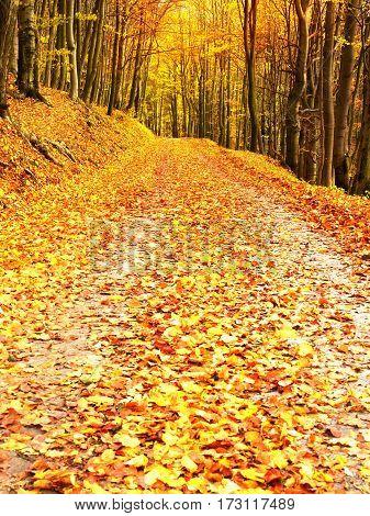 Autum In Nature. Colorful Autumnal Landscape