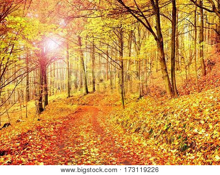 Fall Season. Sun Through Trees On Path In Golden Forest