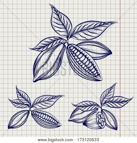 Sketch of cocoa beans set on notebook page background. Vector illustration