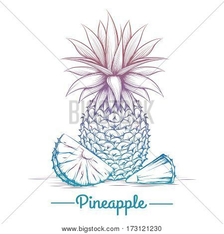 Colorful pineapple sketch isolated on white background. Vector illustration
