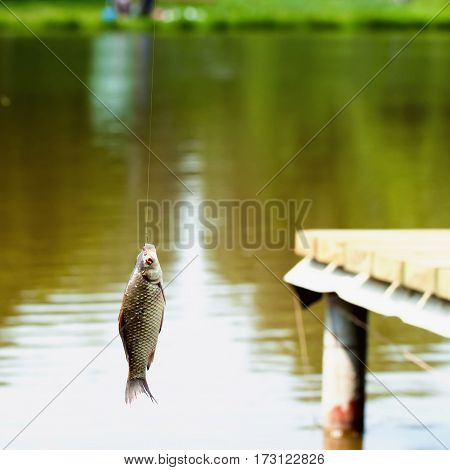 Fishing in lake, crucian carp fish on the fishing rod, summer day. Concept active rest, hobbies, countryside relaks