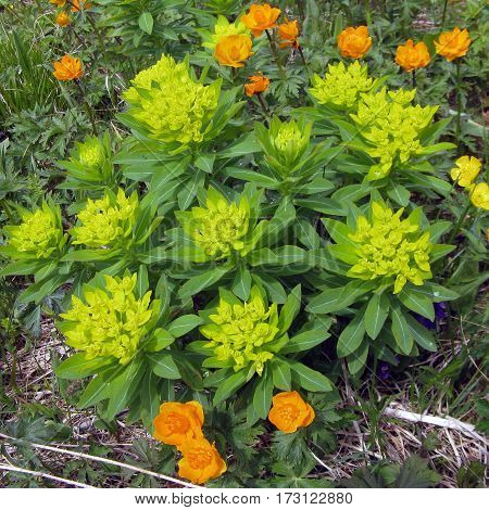 forest flowers summer, tree, spring nature plant