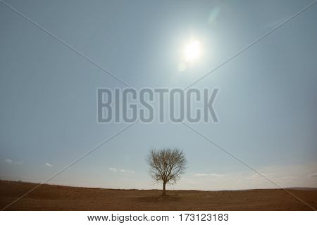 Single tree in summer landscape. Horizontal photo