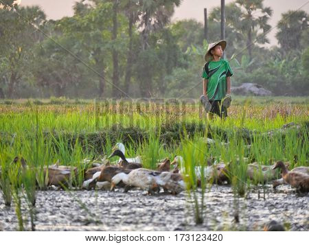 February 2017, hpa-an myanmar - young asian boy with hat standing in a rice field looking curoiusly around during sunset hours