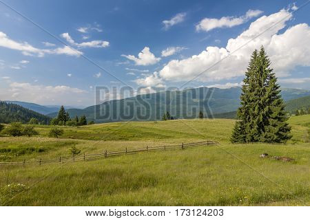 Panorama Of Carpathian Mountains In Summer With Lonely Pine Tree Standing In Front And Puffy Clouds